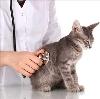 Ветеринарные клиники в Дюртюлах